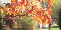 Leggi tutto: Presenze di inizio autunno