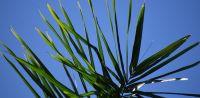 Leggi tutto: Domenica delle Palme