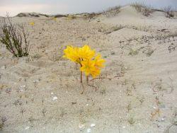 Fiori nel deserto del Cile