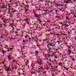 Confettura di Rose di Damasco
